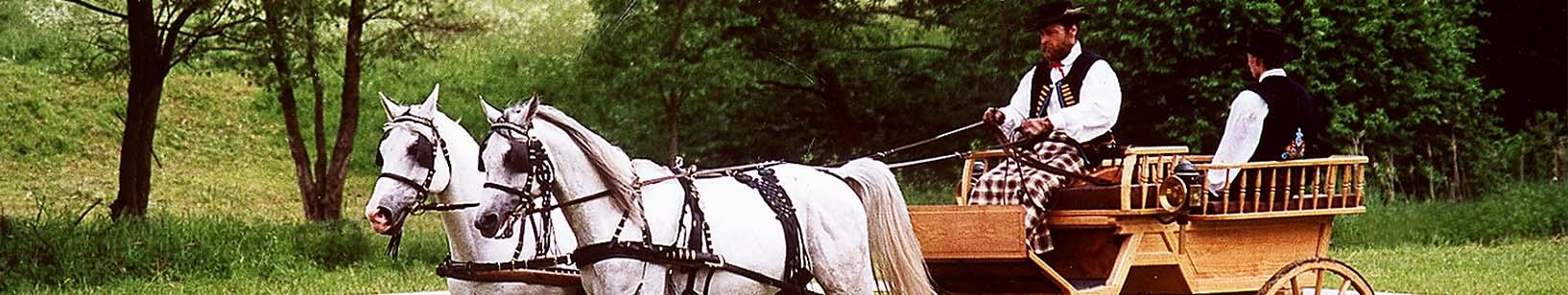 Hřebčín - Chladnokrevné a telokrevné plemena koní Shagya Arab, Norik